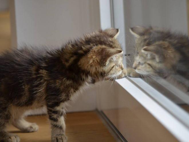 Котенок стоит у окна