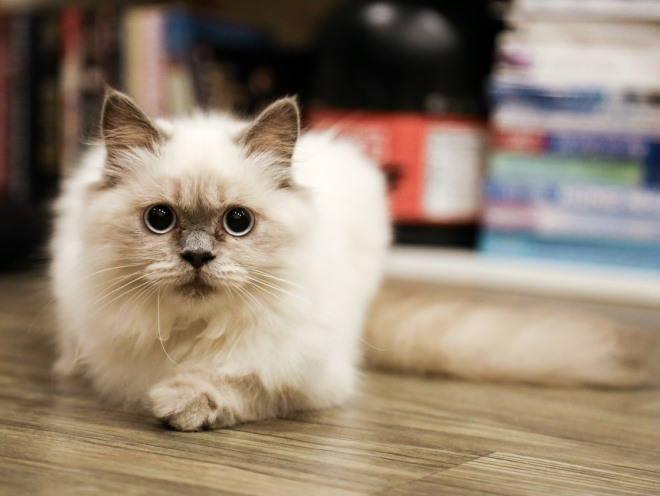 Котенок внимательно смотрит