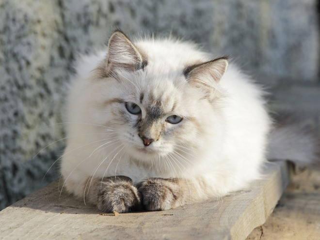 Кошка отдыхает на свежем воздухе