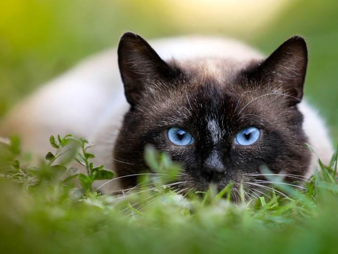 Кошка притаилась в траве