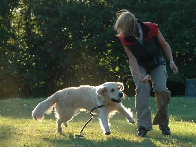 Собака играет на улице с хозяином