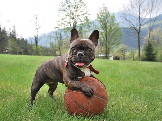 Щенок бегает за мячом