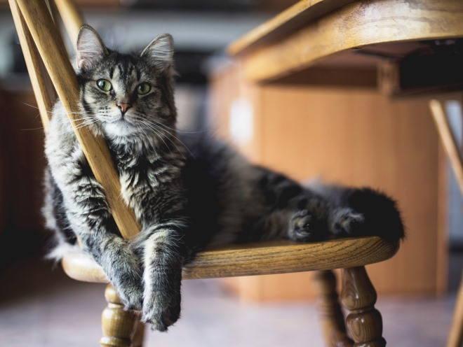 Кошка лежит на кухне