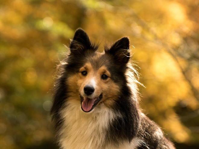 Собака на выгуле в лесу