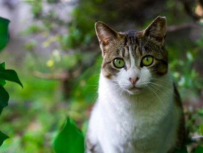 Кошка сидит в кустах