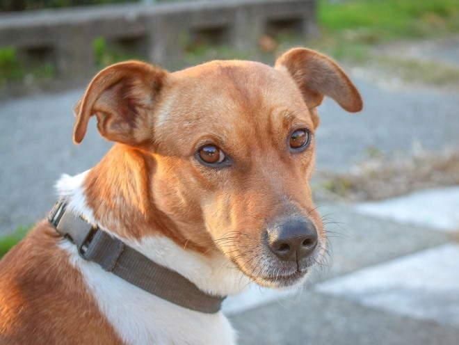 Чем лечить болезнь суставов у собак в домашних условиях разработка суставов для шпагата