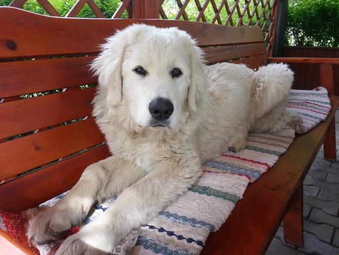Собака лежит на деревянной скамье