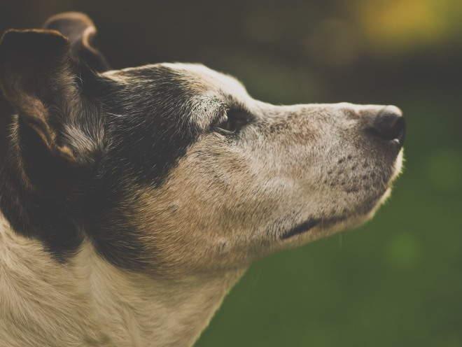 Собака смотрит подняв голову