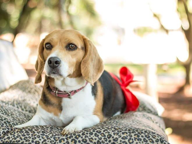 Спондилез у собак: причины, симптомы, лечение