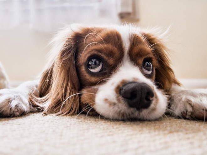 Собака лежит без сил