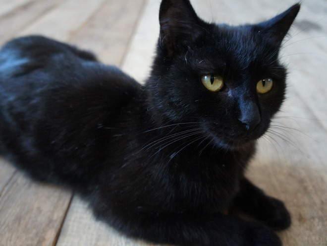 Кот лежит на деревянном полу