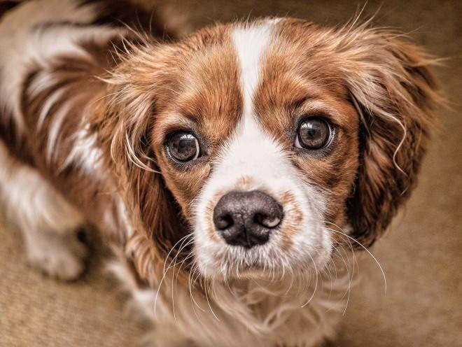 Здоровые глаза у собаки