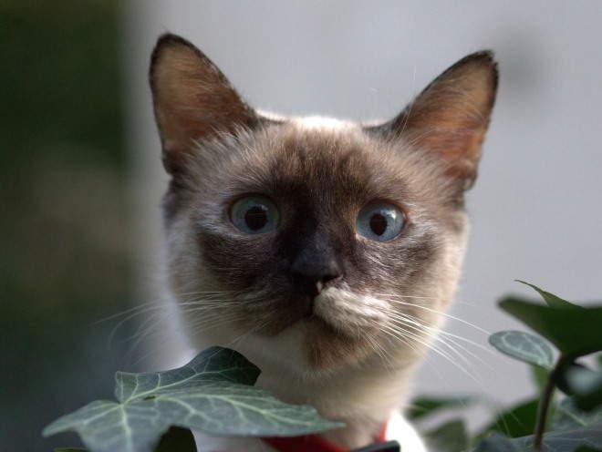 Кот сидит среди цветов