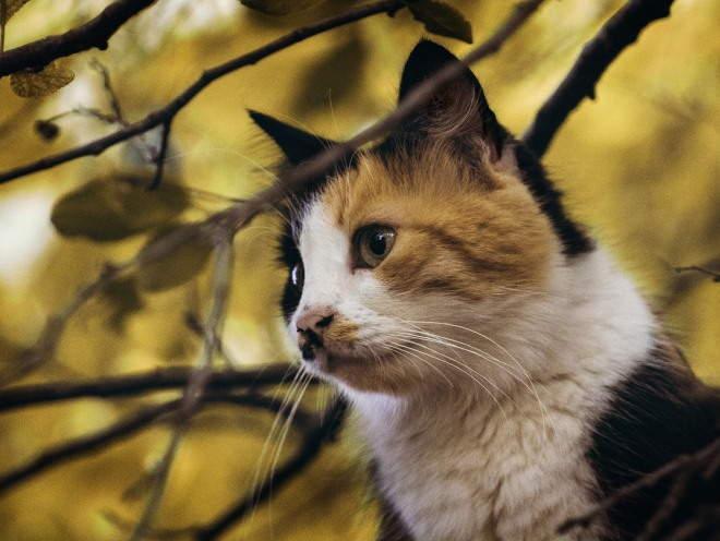 Кот забрался на дерево