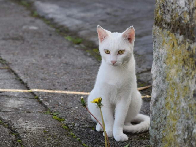 Изображение - Дисплазия тазобедренного сустава у котенка displaziya-tazobedrennogo-sustava-u-koshek