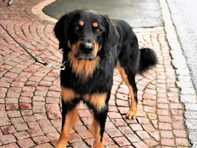 Собака гуляет по улице на поводке