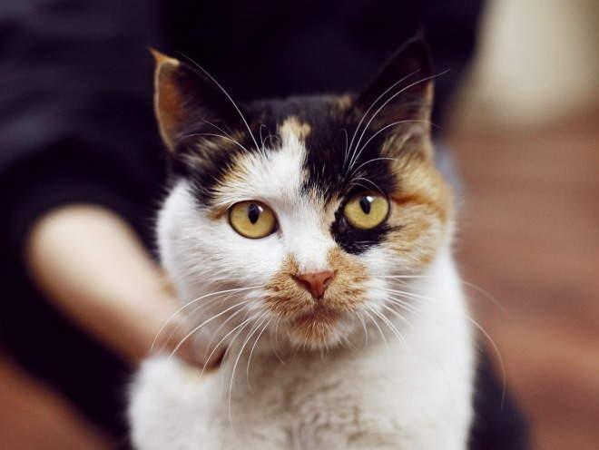 Кошка с грустным видом