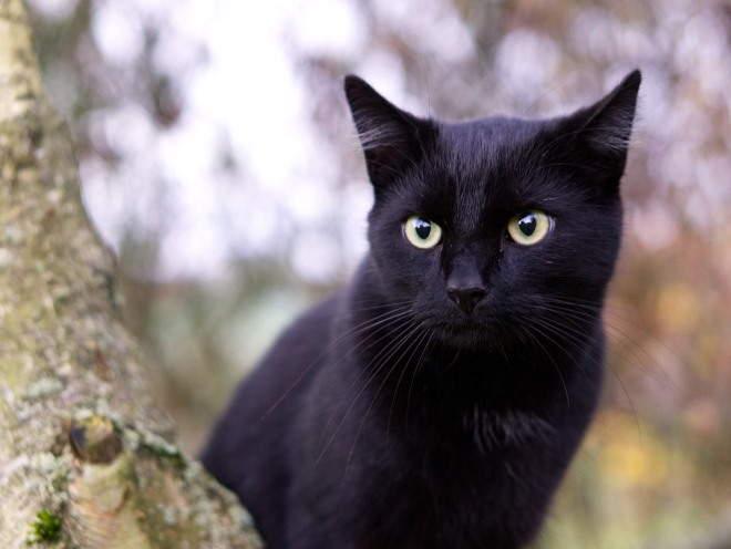 Кошка сидит за деревом