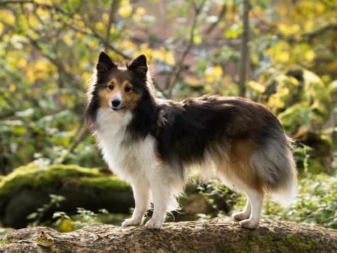 Собака бегает по лесу