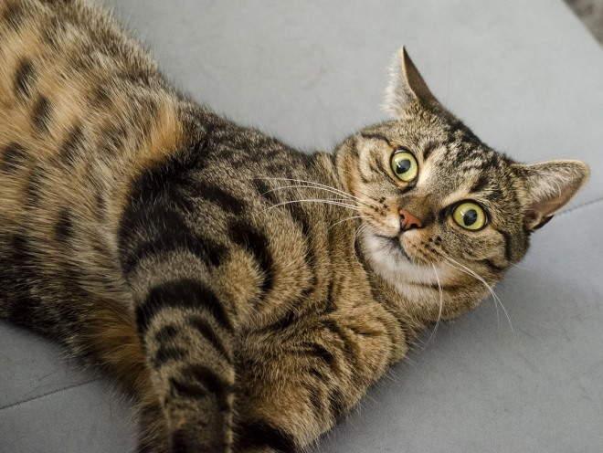 Кот удивленно смотрит