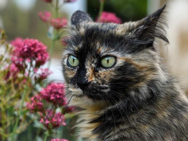 Кот сидит у цветка