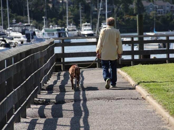 Собака идет рядом с хозяином на поводке