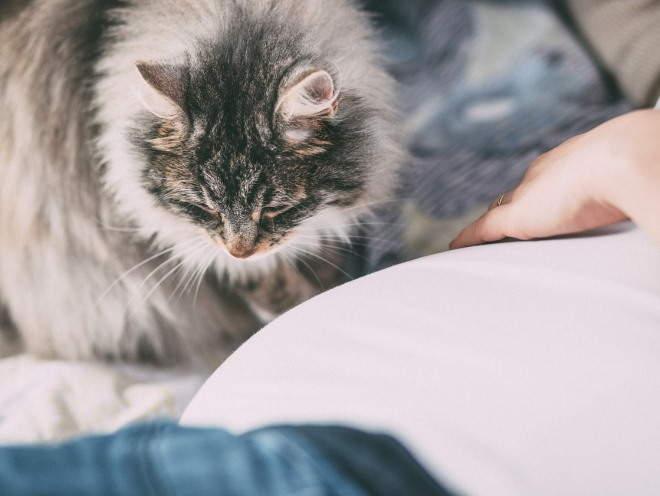 Кошка сидит рядом с хозяином