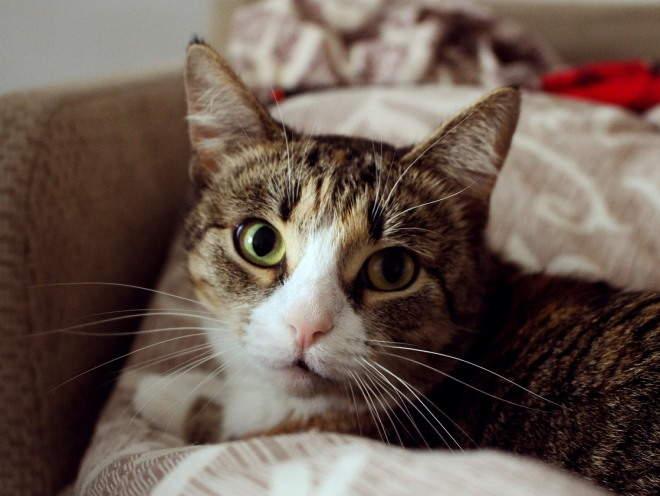 Кошка отдыхает на диване