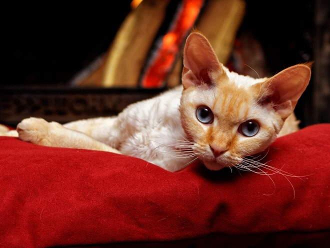 Кошка лежит у камина