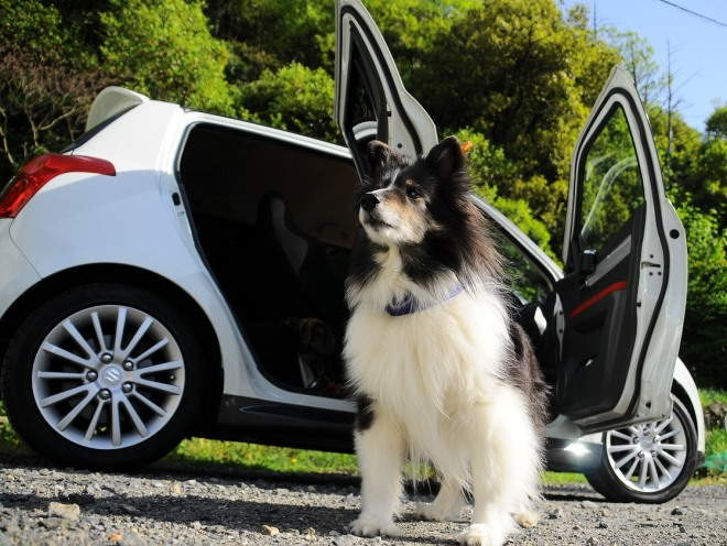 Собака стоит рядом с машиной