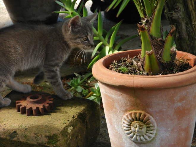 Котенок у цветочного горшка