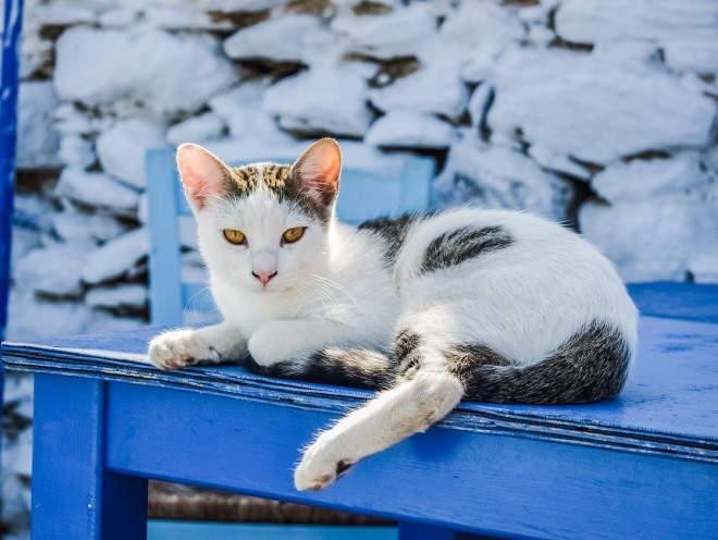 Кот разлегся на уличном столе