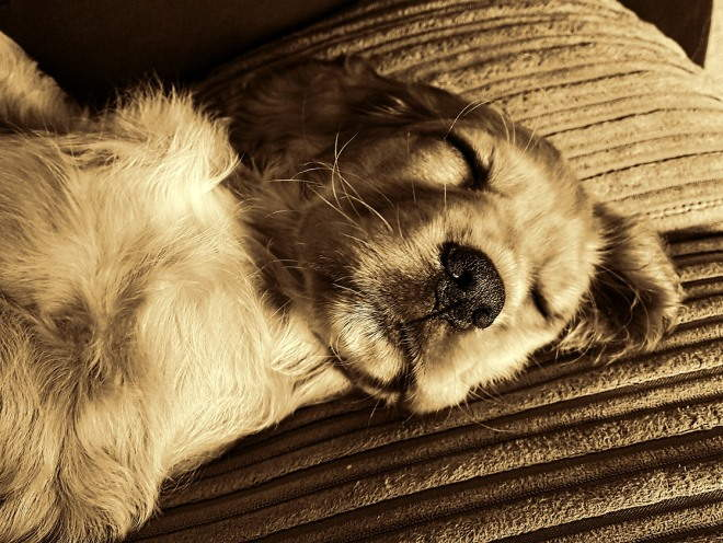 Собака крепко спит