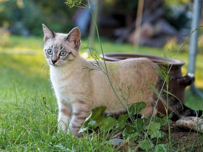 Кот гуляет по саду