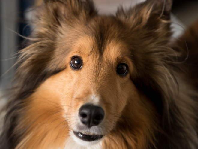 Лимфоузлы у собак
