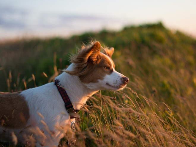 Собака стоит в открытом поле