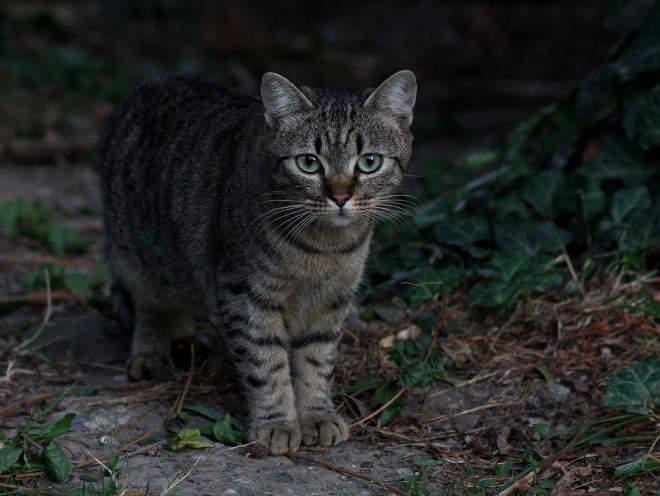 Кот гуляет по лесу