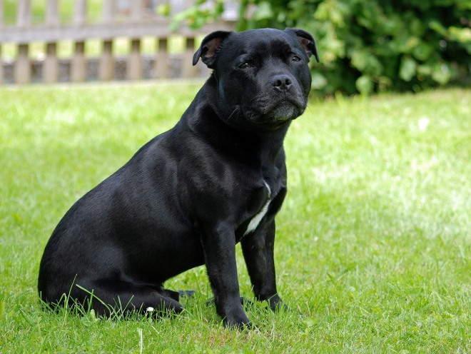Собака сидит на лужайке во дворе