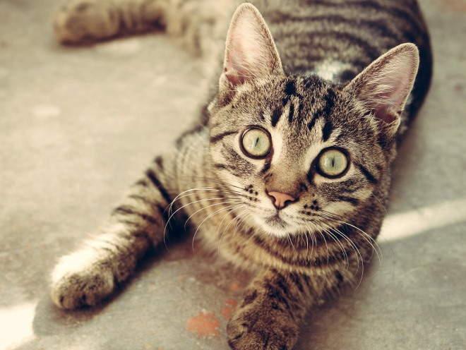 Кошка удивленно смотрит