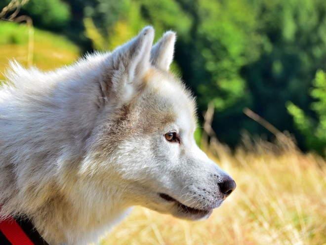 Собака что-то заметила в поле