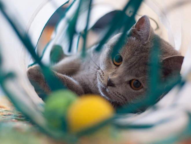 Кошка играет дома