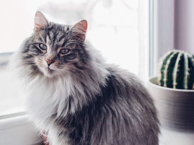 Симптомы кошки при циррозе печени thumbnail
