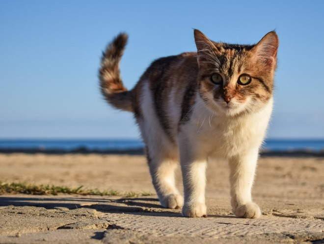 Кошка гуляет на набережной