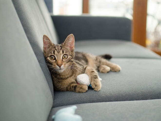 Дисбактериоз у котов симптомы и лечение в домашних условиях thumbnail