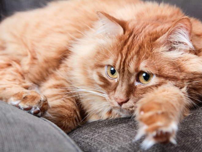 Кошка лежит свернувшись на диване