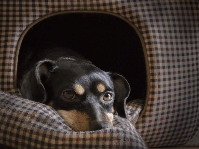 Собака лежит в домике