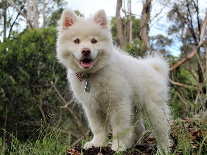 Собака бегает среди кустов