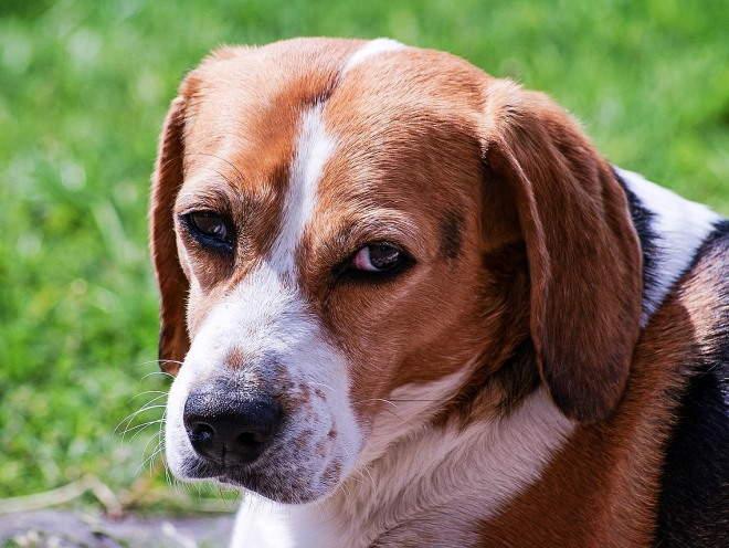 У собаки грустные глаза