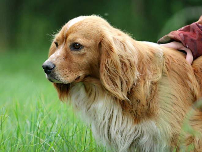 Собака насторожилась во время прогулки