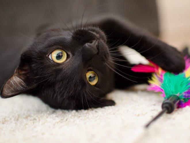 Кот играет лежа на полу